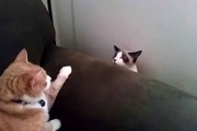 Δυο γάτες συναντιούνται για πρώτη φορά