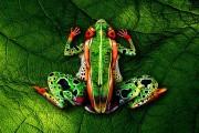 Άνθρωποι μεταμορφώνονται σε ζώα με την τέχνη του body painting (1)