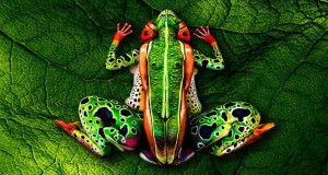 Άνθρωποι μεταμορφώνονται σε ρεαλιστικά ζώα με την τέχνη του body painting