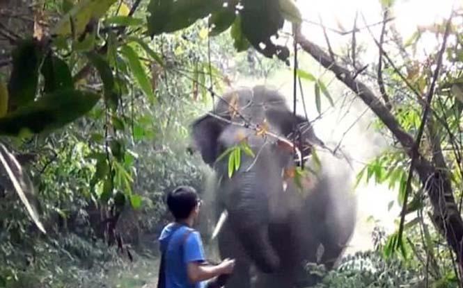 Αντίδραση με απόλυτη ψυχραιμία σε επίθεση ελέφαντα (1)