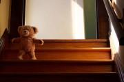 Αρκουδάκι συναντάει τον καινούργιο του φίλο