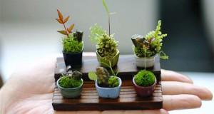 Τα μικροσκοπικά δεντράκια bonsai είναι η νέα τρέλα στην Ιαπωνία