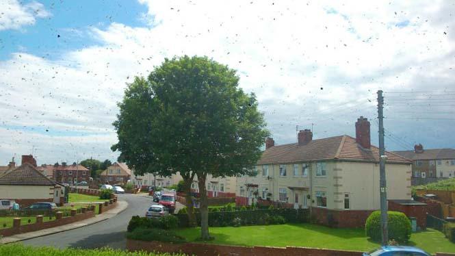 Εισβολή από μέλισσες (1)
