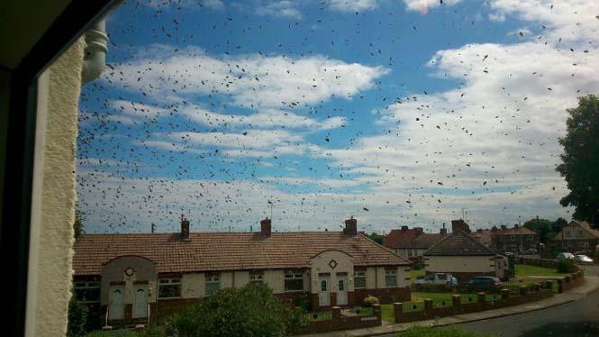 Εισβολή από μέλισσες (9)
