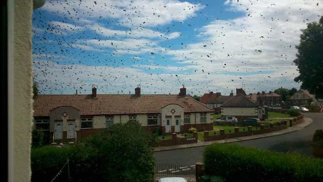 Εισβολή από μέλισσες (10)