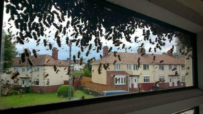 Εισβολή από μέλισσες (16)