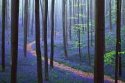 Το εκπληκτικό Μπλε Δάσος του Βελγίου (1)