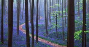 Το εκπληκτικό παραμυθένιο Δάσος Hallebros του Βελγίου