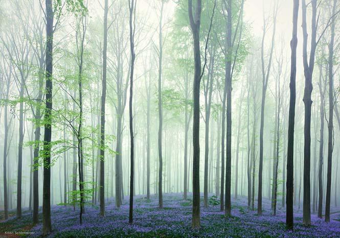 Το εκπληκτικό Μπλε Δάσος του Βελγίου (2)