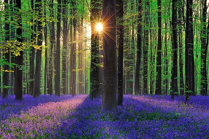 Το εκπληκτικό Μπλε Δάσος του Βελγίου (7)