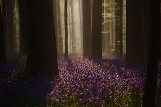 Το εκπληκτικό Μπλε Δάσος του Βελγίου (8)