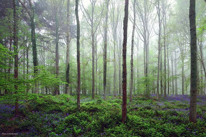 Το εκπληκτικό Μπλε Δάσος του Βελγίου (11)