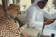 Εν τω μεταξύ, στο Dubai... (1)