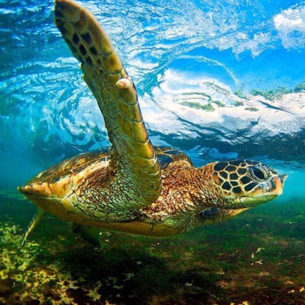 Εντυπωσιακές φωτογραφίες μέσα σε γιγάντια κύματα (7)