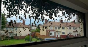Εισβολή από μέλισσες σε ήσυχη γειτονιά της Αγγλίας