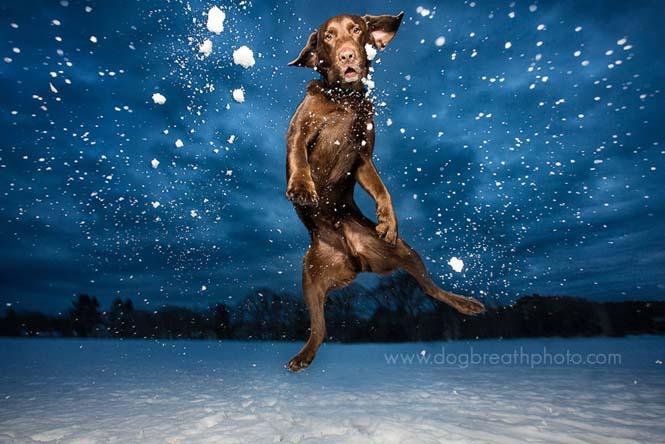 Φωτογραφίες σκύλων από την Kaylee Greer (1)