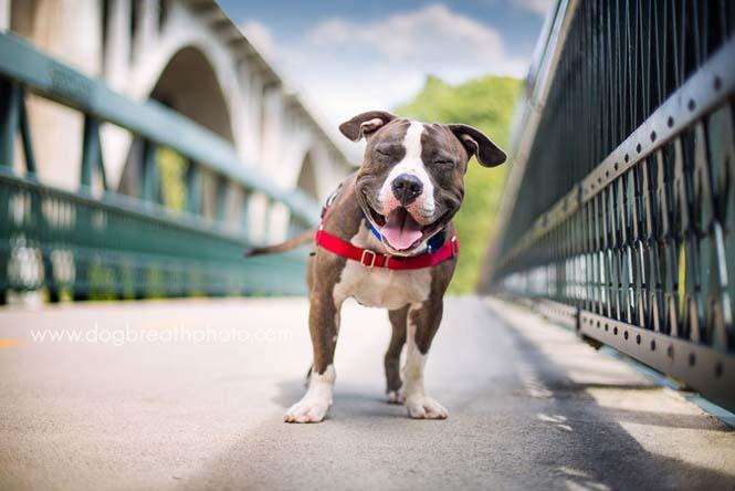 Φωτογραφίες σκύλων από την Kaylee Greer (4)