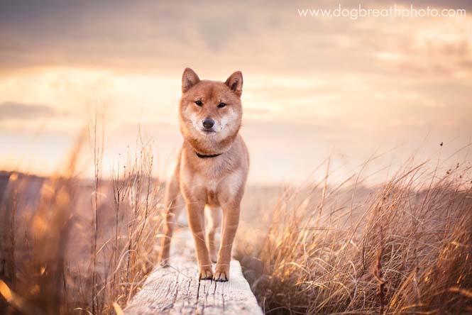 Φωτογραφίες σκύλων από την Kaylee Greer (5)