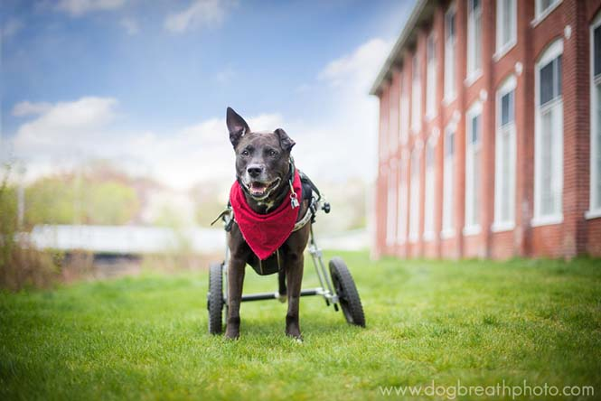 Φωτογραφίες σκύλων από την Kaylee Greer (6)