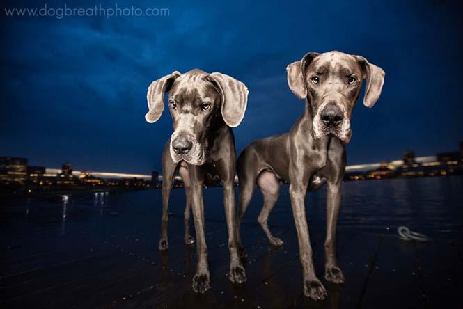 Φωτογραφίες σκύλων από την Kaylee Greer (7)