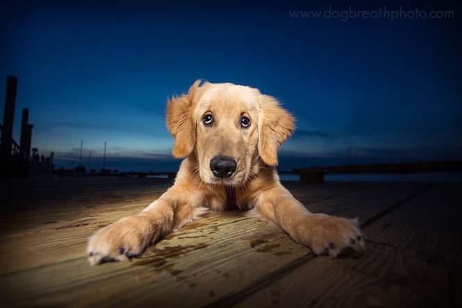 Φωτογραφίες σκύλων από την Kaylee Greer (9)