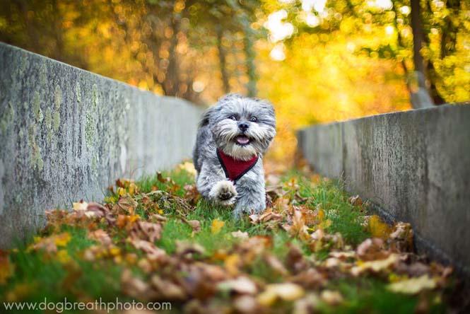 Φωτογραφίες σκύλων από την Kaylee Greer (10)
