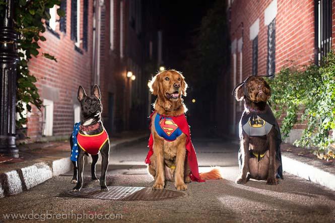 Φωτογραφίες σκύλων από την Kaylee Greer (11)