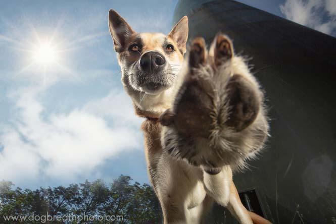 Φωτογραφίες σκύλων από την Kaylee Greer (12)