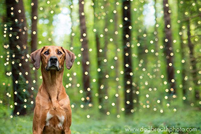 Φωτογραφίες σκύλων από την Kaylee Greer (14)