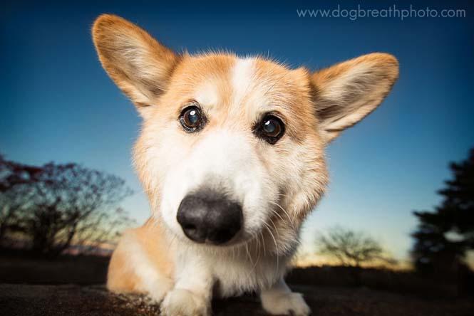 Φωτογραφίες σκύλων από την Kaylee Greer (15)