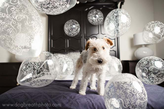 Φωτογραφίες σκύλων από την Kaylee Greer (17)