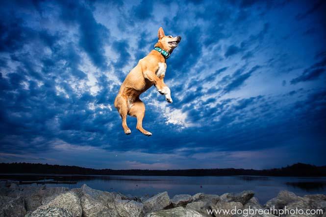 Φωτογραφίες σκύλων από την Kaylee Greer (18)