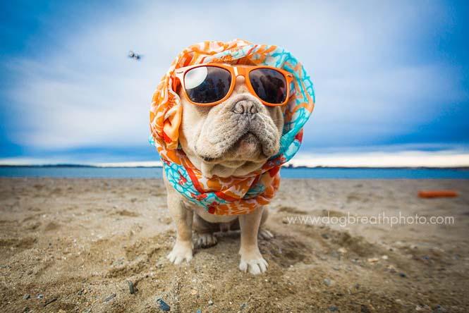 Φωτογραφίες σκύλων από την Kaylee Greer (20)