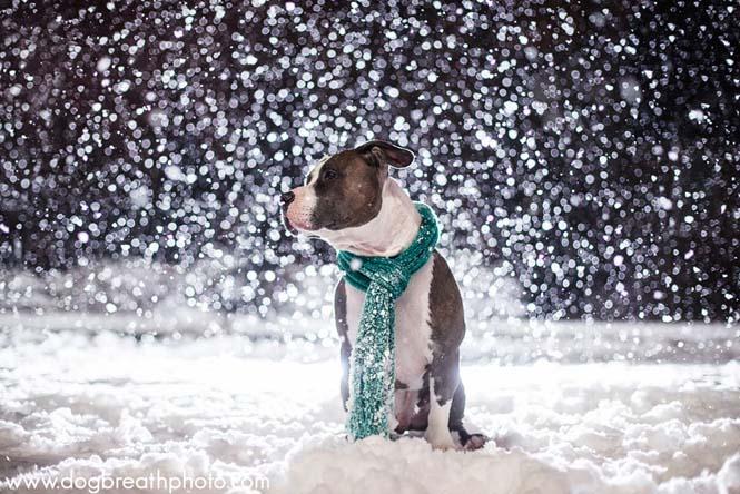 Φωτογραφίες σκύλων από την Kaylee Greer (22)