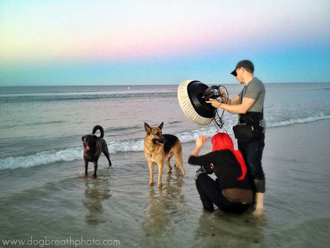 Φωτογραφίες σκύλων από την Kaylee Greer (24)