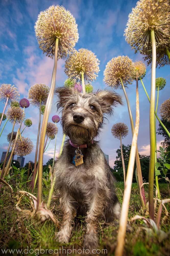 Φωτογραφίες σκύλων από την Kaylee Greer (26)