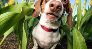 Οι εκπληκτικές φωτογραφίες σκύλων της Kaylee Greer