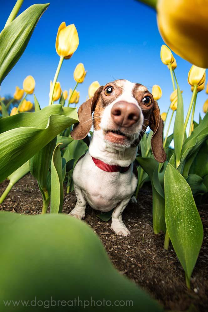 Φωτογραφίες σκύλων από την Kaylee Greer (27)