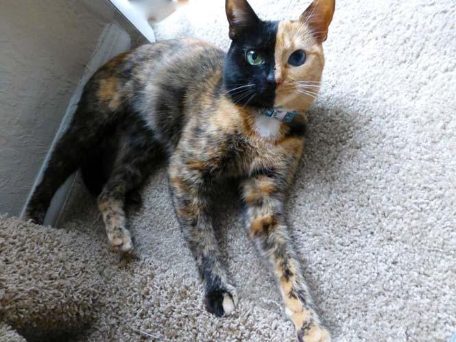 Η γάτα με την πιο μοναδική εμφάνιση στον κόσμο (1)