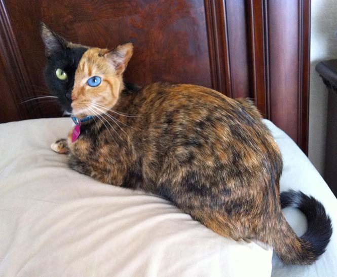 Η γάτα με την πιο μοναδική εμφάνιση στον κόσμο (3)