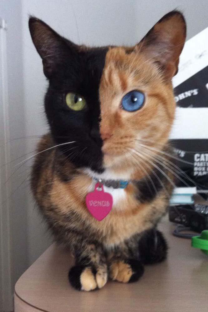 Η γάτα με την πιο μοναδική εμφάνιση στον κόσμο (4)