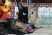 Η γάτα με την πιο μοναδική εμφάνιση στον κόσμο (6)