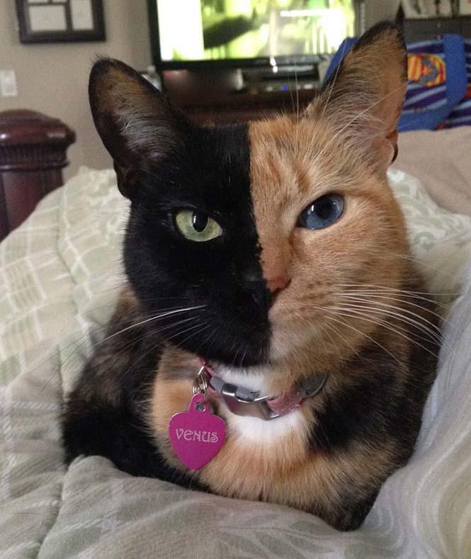 Η γάτα με την πιο μοναδική εμφάνιση στον κόσμο (7)