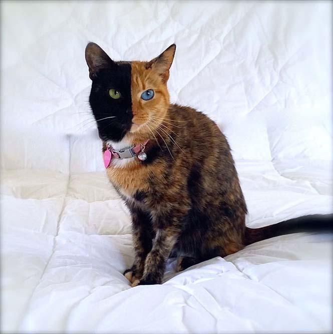 Η γάτα με την πιο μοναδική εμφάνιση στον κόσμο (8)