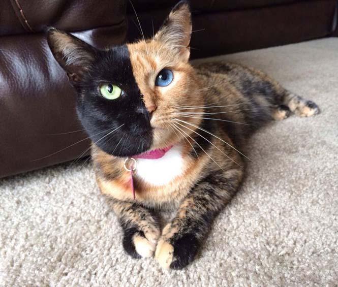 Η γάτα με την πιο μοναδική εμφάνιση στον κόσμο (9)