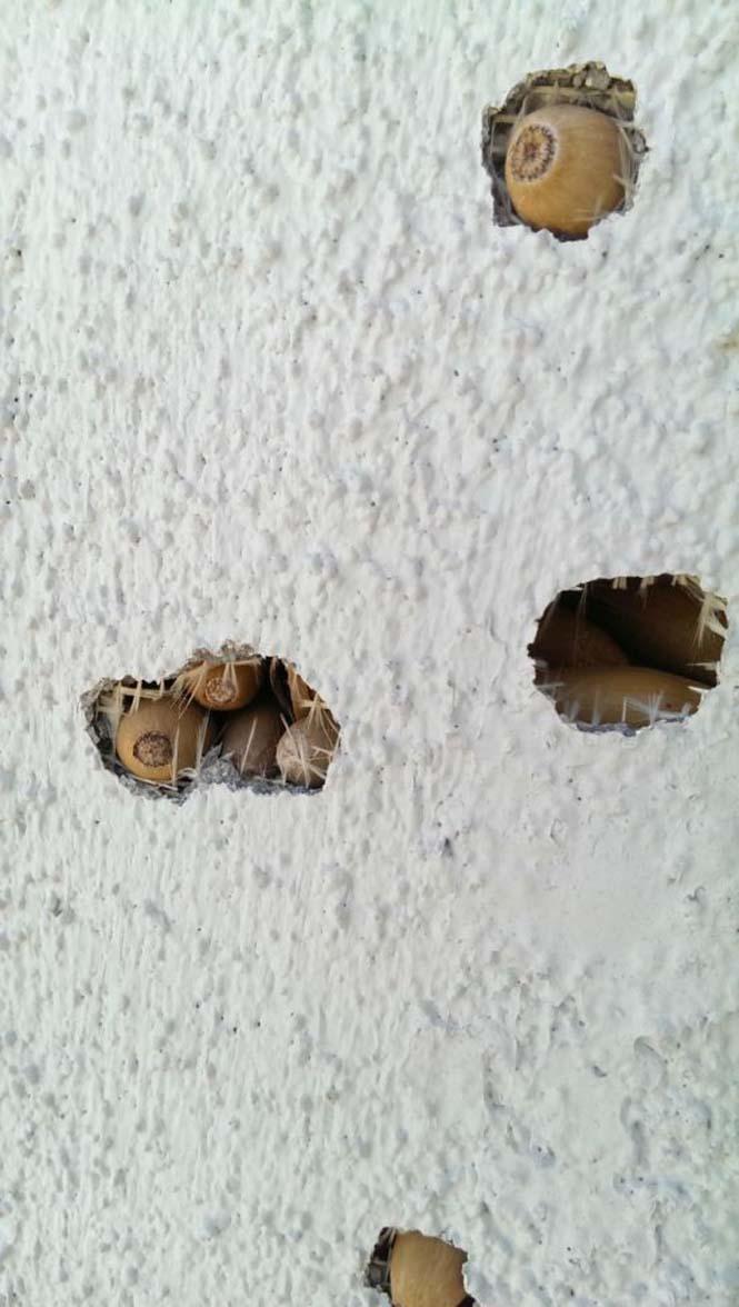 Μπορείτε να μαντέψετε πως έγιναν αυτές οι τρύπες (3)