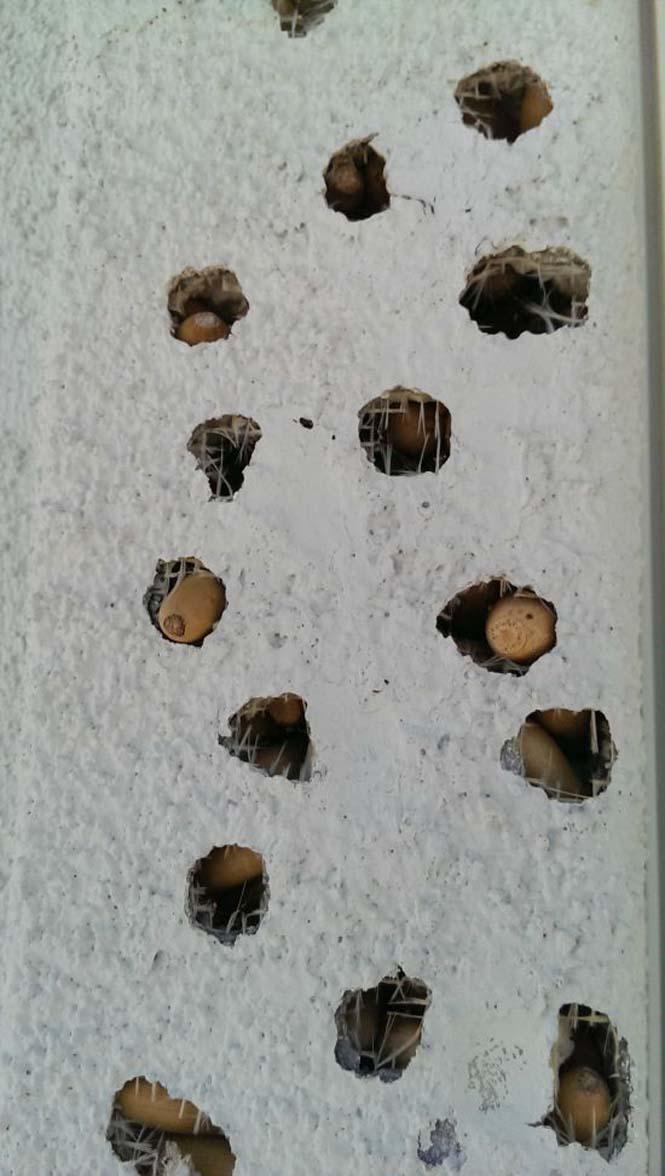 Μπορείτε να μαντέψετε πως έγιναν αυτές οι τρύπες (4)