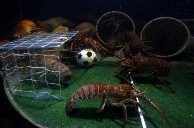 Όταν τα ζώα παίζουν ποδόσφαιρο (5)
