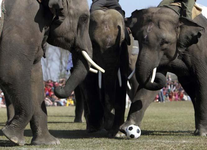 Όταν τα ζώα παίζουν ποδόσφαιρο (7)