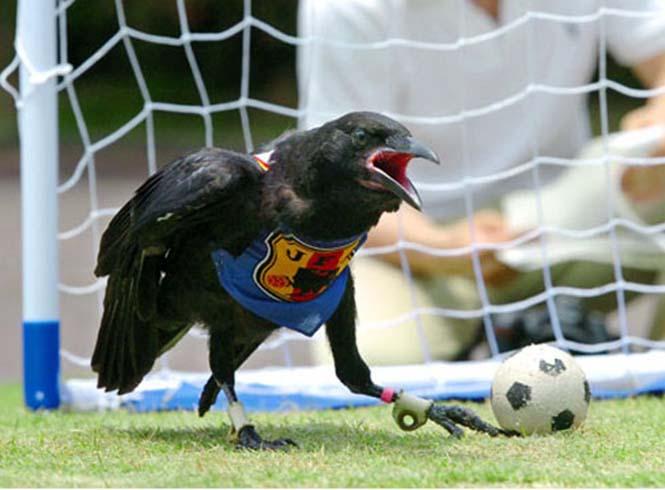 Όταν τα ζώα παίζουν ποδόσφαιρο (14)